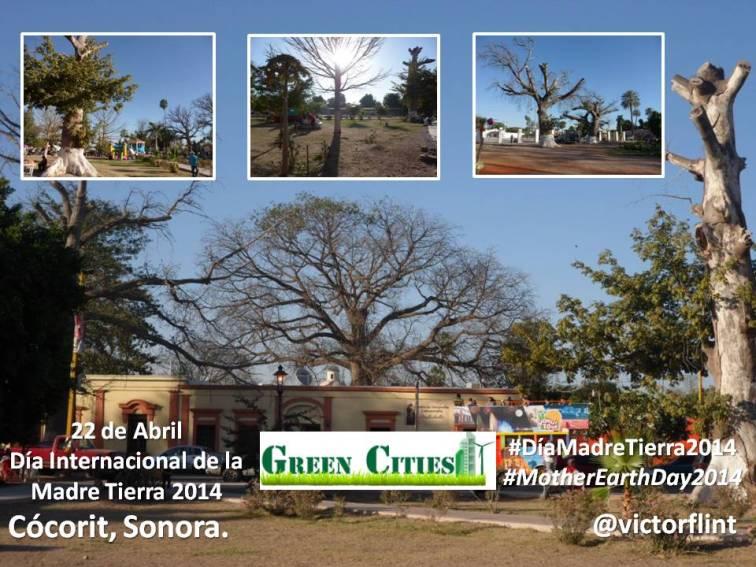 Cócorit, Sonora. Día de la Madre Tierra 2014.