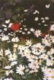 Margaritas San Francisco 1993