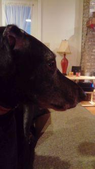 Mister Dog.
