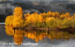 Victoria Camera club member Lois Burton wit a CAPA ribbon at the 127th Toronto Salon