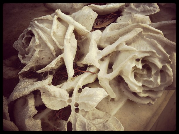 Fading roses at Bonaventure