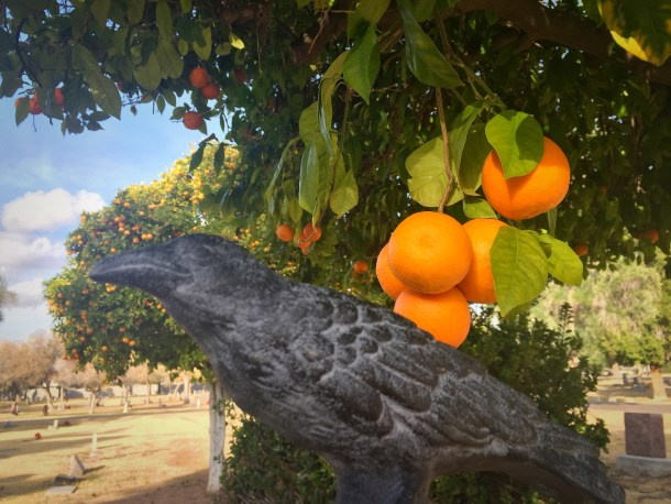 Nevermore and oranges at Mesa Cemetery