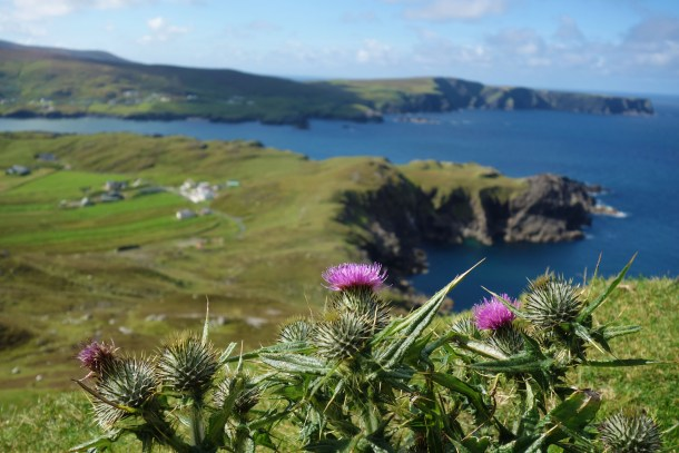 The ubiquitous Irish thistles with Glencolmcille in the background