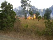 grassy woodland burn