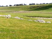 Grazed native pasture