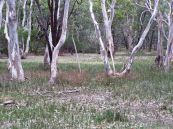 Bannockburn Bushland Reserrve