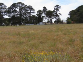 Rokewood Cemetery grassland