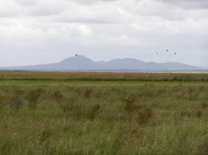 view to the You Yangs