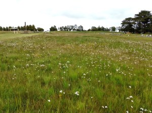 Dowling Forest Cemetery grassland