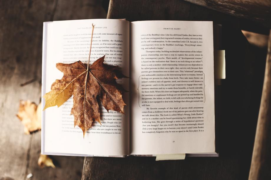 photo of a leaf on top of an open book