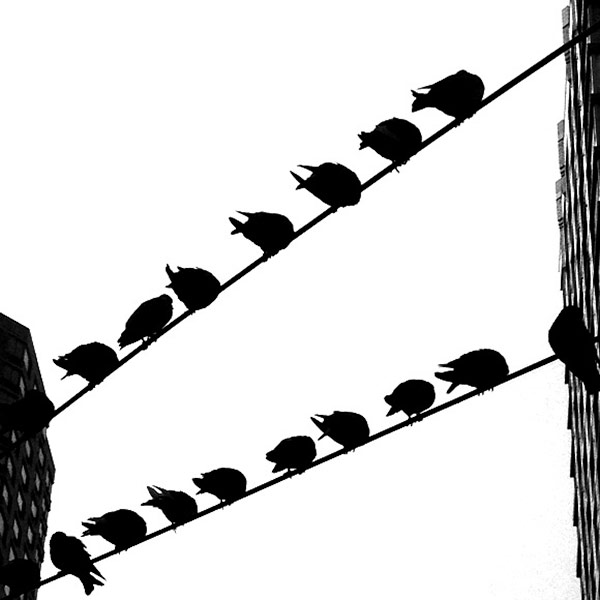 Pigeons on 8th Avenue