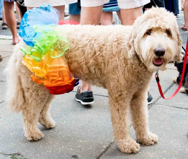 Dogs of Pride