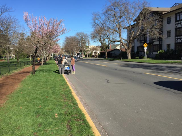 No room for a sidewalk, but 14m for vehicles: Cook St next to Beacon Hill Park playground.