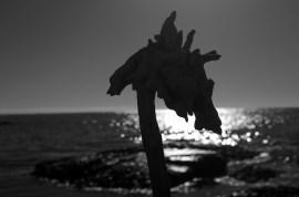 Sea Horse Silhouette