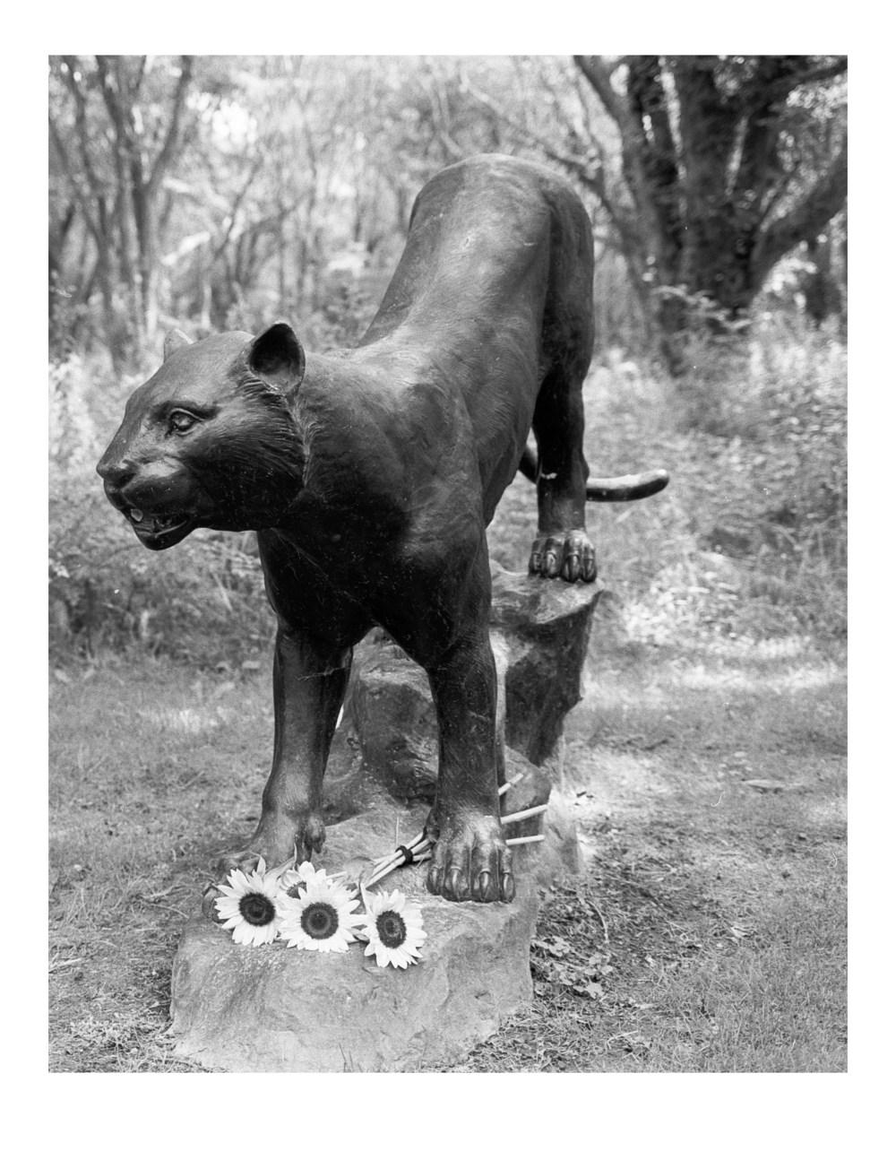 Lion in the Woods at Sakonnet Vineyard