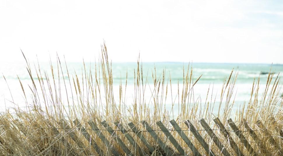 Beach Fence, Castle Hill