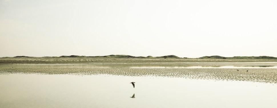 Gull Reflection