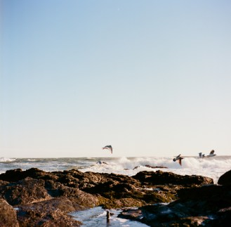 Wind and Waves and Birds-6