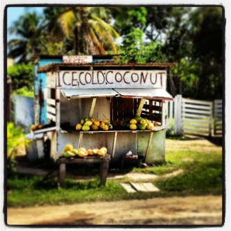 Ice cold coconut