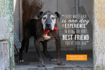 November is Adopt a Senior Pet Month!