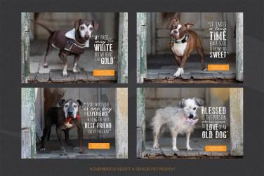 November Adopt a Senior Pet Month