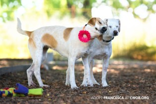Rescue and Shelter dogs in Sonoma County