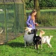 Jadie heeft alle aandacht van de geiten