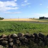 En bild från i somras som väcker din sommarlängtan - Utsikt från gärdsgården längst ner i trädgården i Örmölla. Lite gröna fält, lite gula fält och lite blå himmel. Kanske det finaste om man inte räknar havet då, förstås.