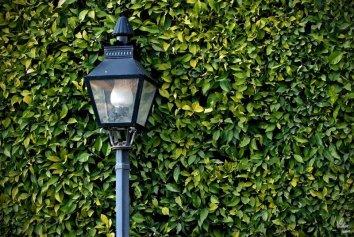 Luz de Vida   Light of Life