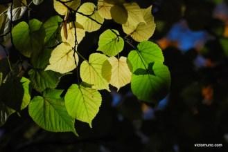 autumn-2011-28