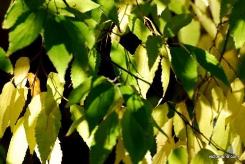 autumn-2011-32