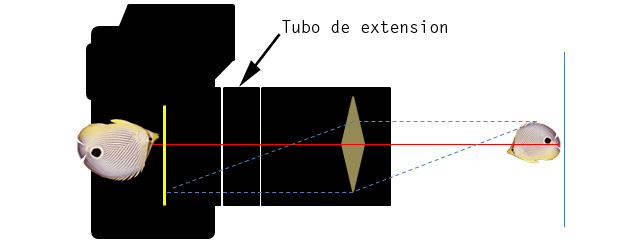 Macrofotografia: Tubos de Extensión (6/6)