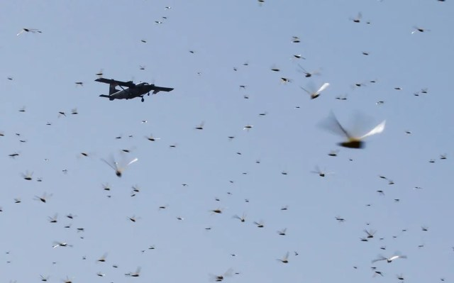 A plane conducting the aerial spraying of pesticides, flies over a swarm of desert locusts in Kenya, Jan. 17, 2020. (File photo: Reuters)