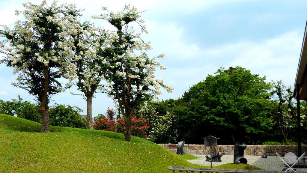 Nara Park Árvores