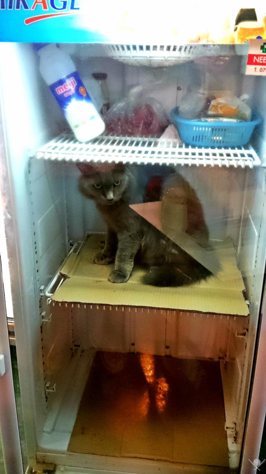 Thailand - Koh Phi Phi - Gatos na geladeira - Vida de Tsuge - VDT