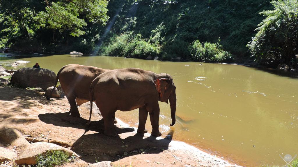 Thailand - Chiang Mai - Elefantes 2 - Viagens - Vida de Tsuge - VDT