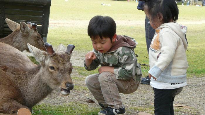 Nara_Japão_Roteiro-20-dias-no-Japão_Next-Stop-Japão_Vida-de-Tsuge_VDT