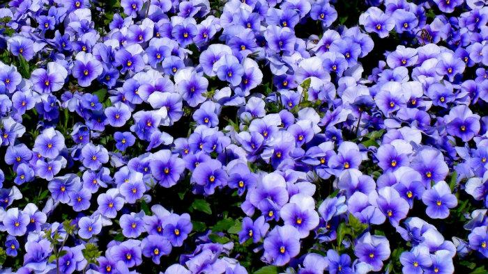 Flowers March - Primavera no Japão - Vida de Tsuge
