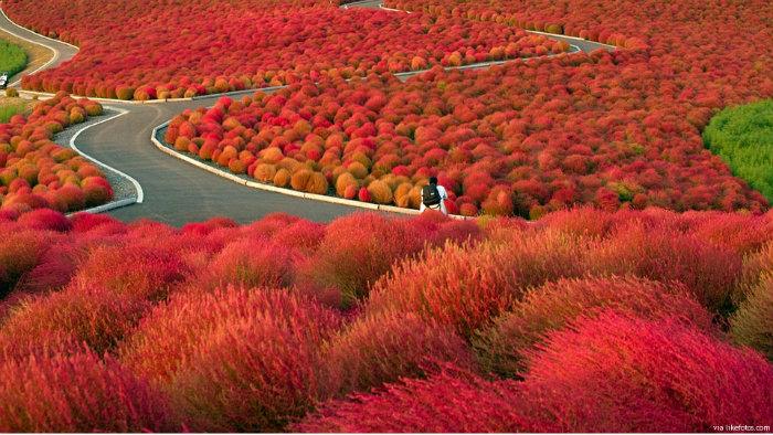 outono-no-japão_7_cultura-japonesa_Vida-de-Tsuge_VDT