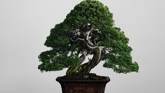 bonsai-700_Pontos-turísticos-do-japão-desconhecidos_Viagem-japão_Vida-de-Tsuge_VDT