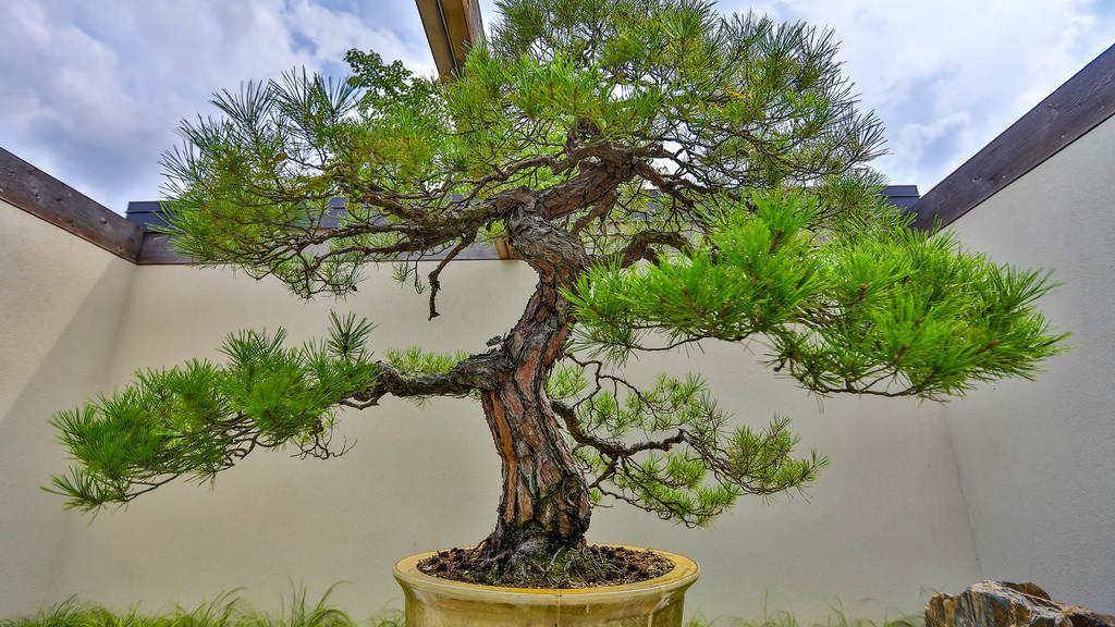 omiya-bonsai_Pontos-turísticos-do-japão-desconhecidos_Viagem-japão_Vida-de-Tsuge_VDT