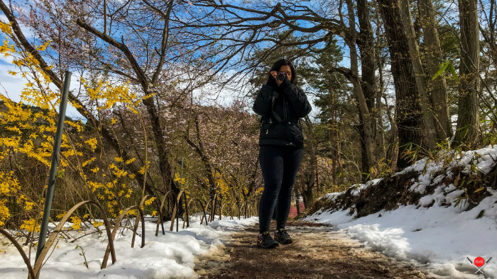 hanamiyama-park-3_explorando-o-japao_vida-de-tsuge_vdt