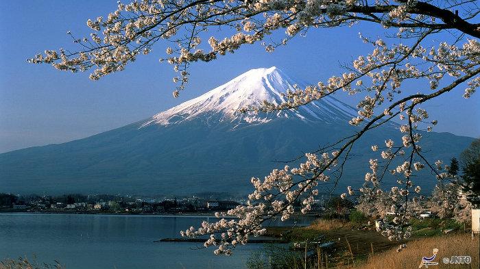 m_101085_explorando-o-sakura-matsuri_viagem-japao_vida-de-tsuge-vdt