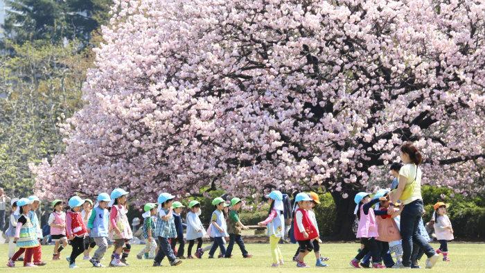 m_181967_explorando-o-sakura-matsuri_viagem-japao_vida-de-tsuge-vdt