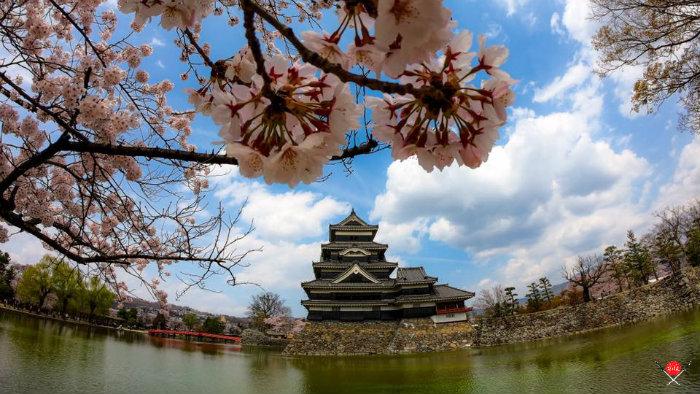 matsumoto-castle_explorando-o-sakura-matsuri_viagem-japao_vida-de-tsuge-vdt