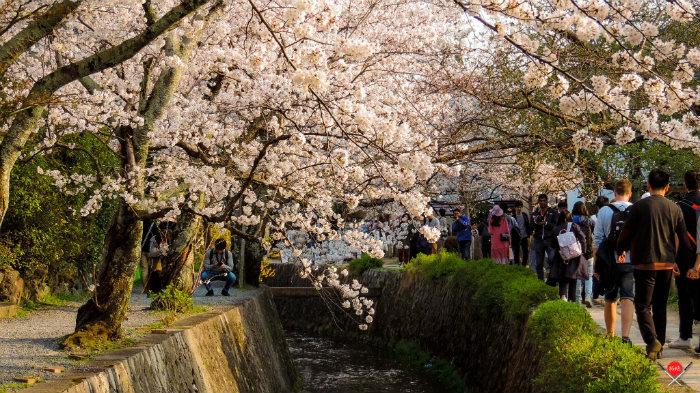 philosophers-path_explorando-o-sakura-matsuri_viagem-japao_vida-de-tsuge-vdt