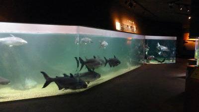 aqua-toto402_aquarios-no-japao_viagem-pro-japao_vida-de-tsuge_vdt