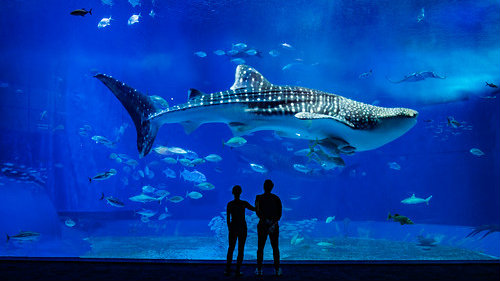 churaumi_aquarios-no-japao_viagem-pro-japao_vida-de-tsuge_vdt