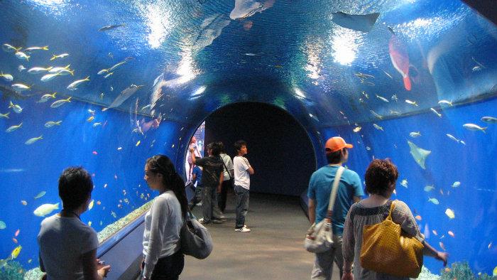 osaka-aquarium3_aquarios-no-japao_viagem-pro-japao_vida-de-tsuge_vdt