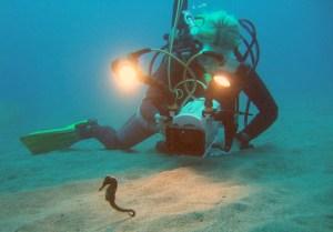 Filmando un caballito de mar, por K. Katsuta. Licencia CC-By Attribution-ShareAlike